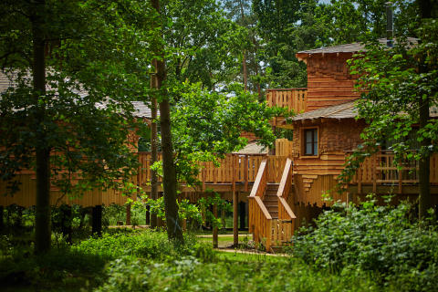 Center Parcs announces plans for significant investment in Longford Forest
