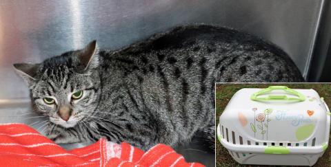 Unbekannte setzen Katze in auffälliger Transportbox aus