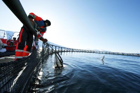 Solid julimåned for sjømateksporten