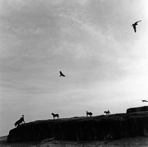 © Graciela Iturbide, Perros Perdidos, India, 1998