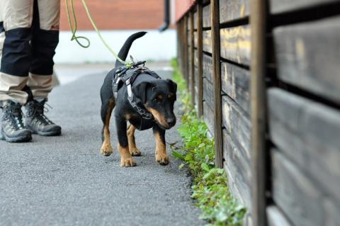 Sökhundar mot råttor – effektiv metod som hindrar smittspridning på sikt