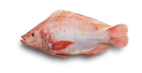 Gårdsfisk tecknar första externa gården