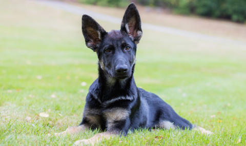 Tre Uppsalaforskare får stipendier – utreder vanliga hundsjukdomar