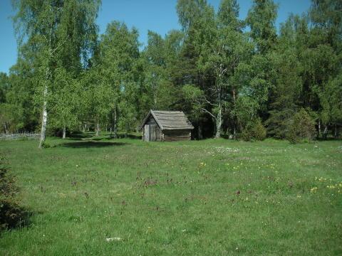 Ny studie: Tio skäl att bevara gräsmarkerna
