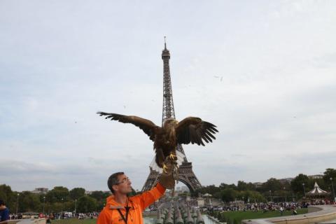 PARIS EAGLE