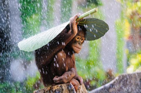 Copyright Andrew Suryono, l'Indonésie, Sony World Photography Awards