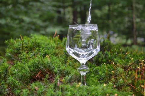 Veolia Stiftung und Stadtwerke Gifhorn fördern die Pflanzung eines Trinkwasserwalds