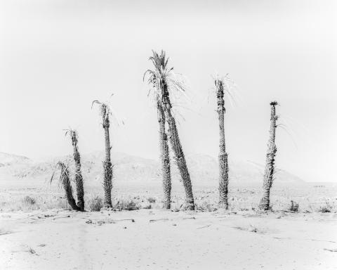 © Sybren Vanoverberghe, Belgium, Shortlist, Professional competition, Landscape , 2020 Sony World Photography Awards (1)