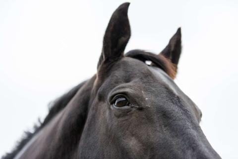 Träffa oss på Gothenburg Horse Show