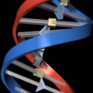 In-house analysis pipeline for next generation genome sequencing speeds up innovation