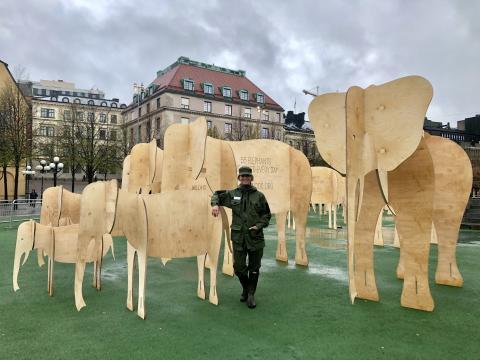 Securitas bevakar 55 elefanter i Kungsträdgården