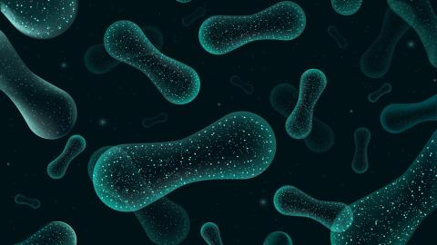 PRESS RELEASE: A new study shows that Calanus® Oil intake antagonizes negative changes in gut microbiota due to obesity