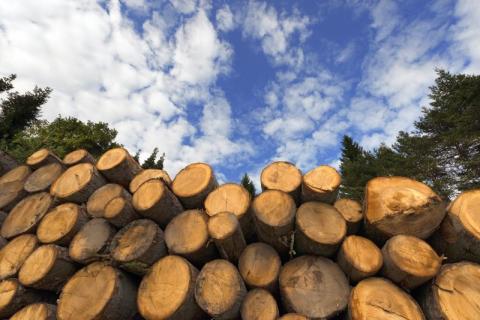 Ytterligare 75 miljoner kronor till forskning om Skogsråvaror och Biomassa