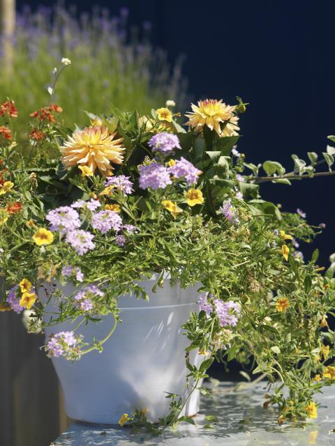 Tips vid plantering av sommarblommor!