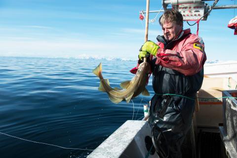 Hvordan gikk det for norsk torsk i 2020?