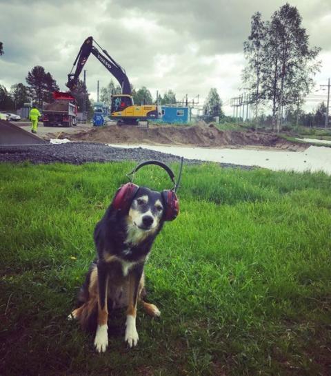 Djursjukhuset Gammelstad byggs ut
