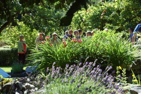Rekordmånga trädgårdar att besöka under Tusen Trädgårdar