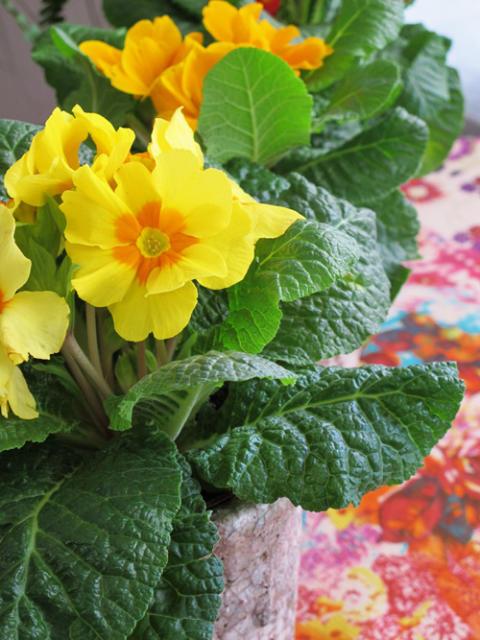 Månadens blomma - januari 2011