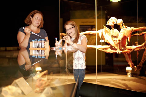 Meet the scientists at Body Worlds