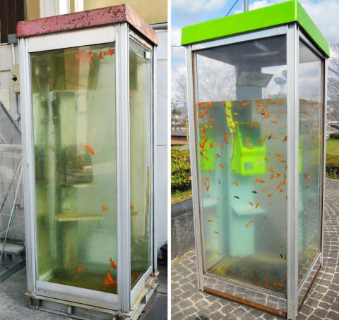 Japanese artist loses court case over copy of goldfish-filled phone booth