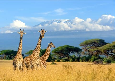 Travel Africa Network wybiera pozycję satelitarną HOTBIRD do dystrybucji pierwszego afrykańskiego kanału HD o tematyce podróżniczej