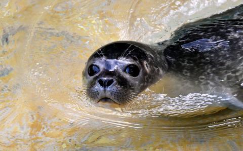 Ciao Bella - siebenjährige Lara Isabella aus Rostock ist Namensgeberin und Taufpatin für das Robbenbaby