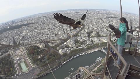Action Cam eagle
