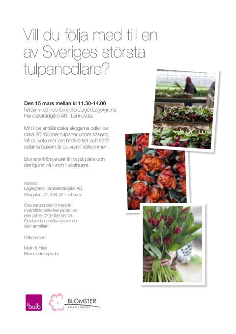 Vill du följa med till en av Sveriges största tulpanodlare?