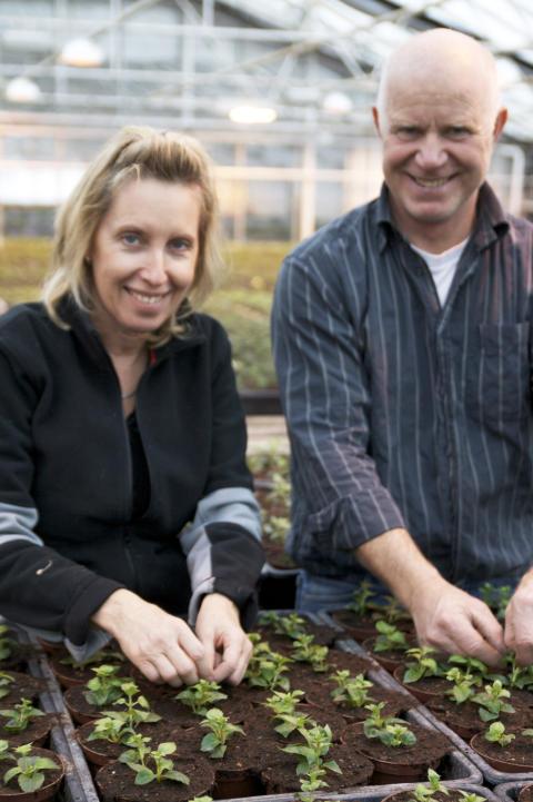 Helene och Paul Orevad toppar fuchsiaplantor inför våren och sommaren 2009