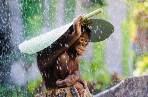 (c) Andrew Suryono, Indonesia, Entry, Nature and Wildlife Category, Open Competition, 2015 Sony World Photography Awards
