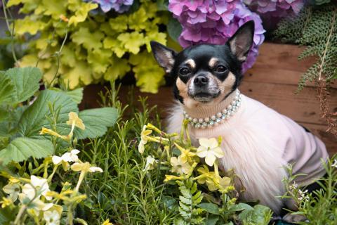 Jak wylansować ulubionego zwierzaka  na gwiazdę Instagrama