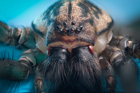 House spider captured with α7R II and 90mm Sony Macro Lens