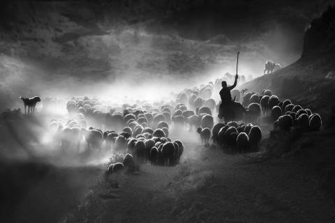 Sony Dünya Fotoğraf Ödülleri – Türkiye Ulusal Ödülünü kazanan isim belli oldu