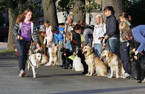 50 år med opplæring av førerhund i Norge