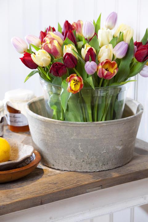 Välkommen till färgsprakande workshops med vårens primörer tulpaner och John Taylor i Malmö!