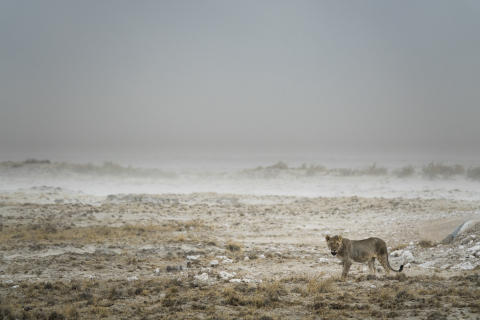 Il cerchio della vita. La difficile sopravvivenza degli animali selvaggi africani documentata dalle meravigliose immagini di un pluripremiato fotografo naturalista