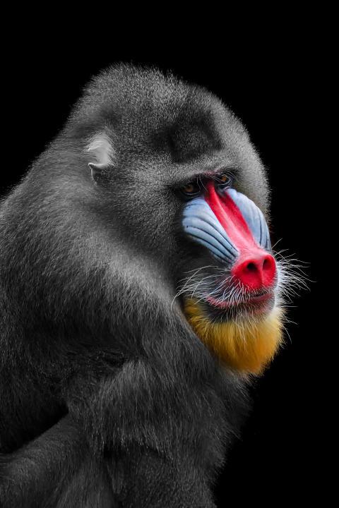 ShirlyPricillia_Indonesia_Open_Wildlife_2018