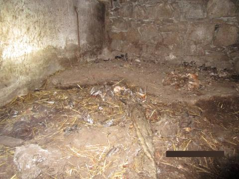 The conditions some of the dogs were left in