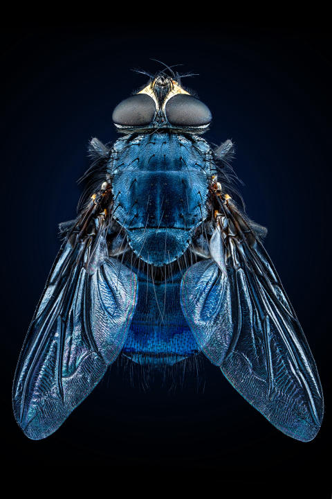 © Pierre Anquet, France, Shortlist, Professional competition, Natural World & Wildlife, 2020 Sony World Photography Awards