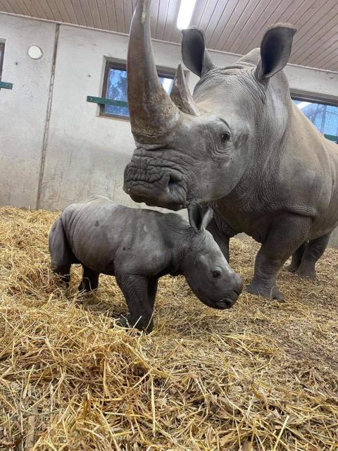 En noshörningsunge har sett dagens ljus på Kolmården