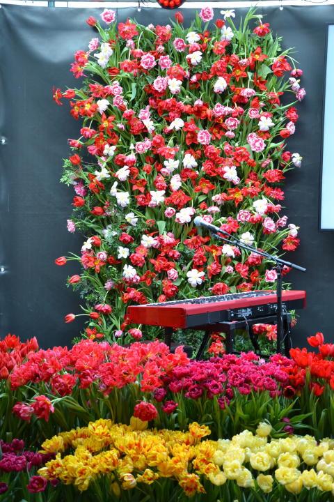 Blomsterfrämjandets och MixMegapol unlugged tulpankonsert