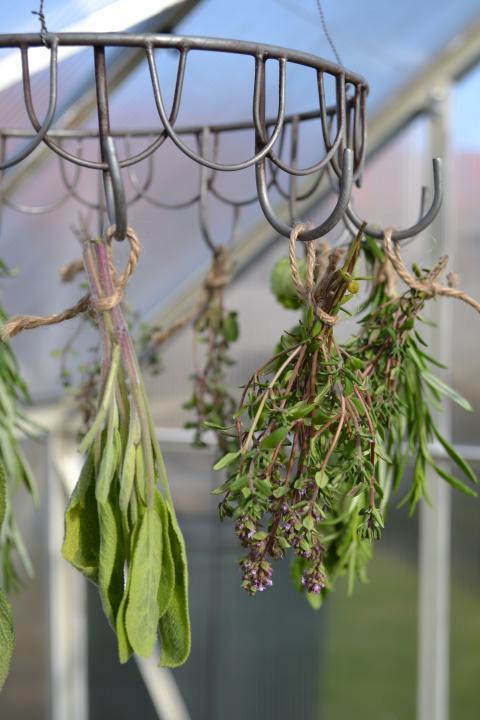 Salvia och timjan