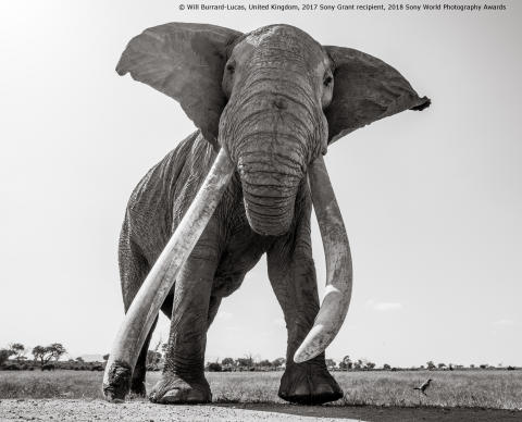 Will Burrard-Lucas_United Kingdom_Sony Grant