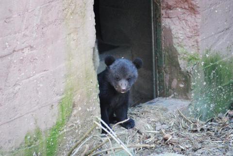 Säsongstart med björnungar och äggjakt i Skånes Djurpark