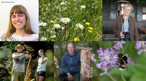 Svenska Bin och Pollinera Sverige sprider kunskap om humlor, bin, pollinering och ängar