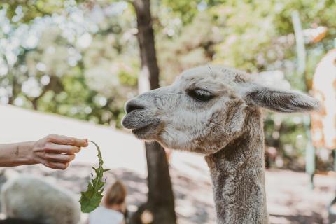Parken Zoo bygger ett stort tam-och klappdjursområde