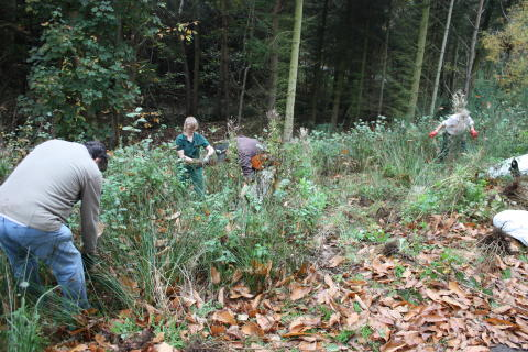 Center Parcs donates alder trees to local Community Tree Trust