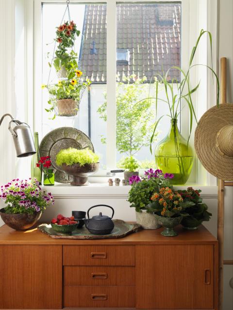 Tropikerna - fönsterbräda.