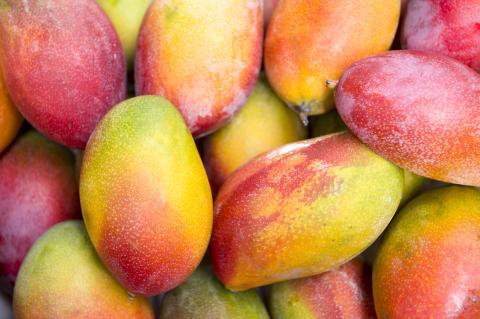 Mangoes & Co go direct