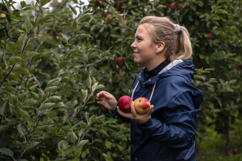 Medborgarforskare ska leta skadegörare i egen trädgård